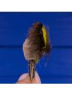 Брошь оберег охотника из ярких перьев птиц, которые водятся в горах Шотландии, и стриженой шерсти оленя, одного из главных символов кельтов