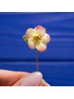 Брошь-булавка Spode с объемными цветами