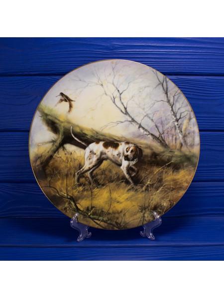 Тарелка от Coalport № 1213 The Pointer (пойнтер) коллекционной серии Sporting Dogs (охотничьи собаки)