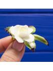 Изящная винтажная брошь с объемным фарфоровым цветком белой розы, расписанным вручную, от Cara China Co